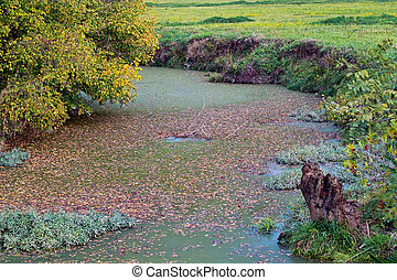 Stagnant Water - A standing river that has gone stagnant
