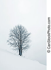 Tree in Snow - A lonely tree, on a snow field, with mist.