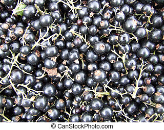 black currants on the market