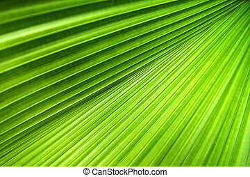 Palm Leaf Texture - Palm leaf with a strong diagonal through...