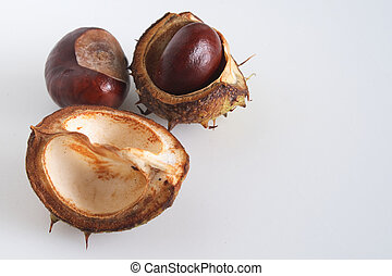 conkers and there shells over a light background