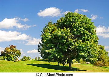 Summer landscape - Green summer landscape with one leafy...