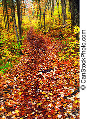 Trail in fall forest - Hiking trail in fall forest covered...
