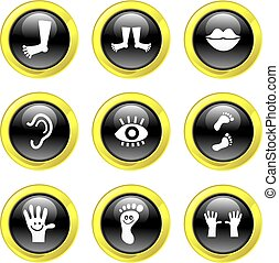 anatomy icons - collection of black glass anatomy icons...