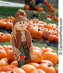 Scarecrow in patch of pumpkins - Scarecrow in the middle of...