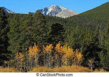Longs Peak, autumn aspens - row of golden aspens below Longs...