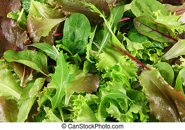 Fresh mixed lettuces, top view - Mixed lettuces closeup