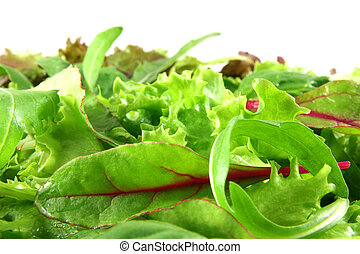 Fresh mixed lettuces, horizontal - Mixed lettuces closeup,...