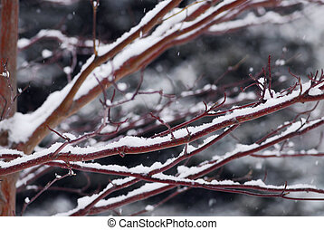 Snow covered branches - Snow covered tree branches in winter...