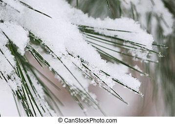 sneeuw, dennenboom, Naalden