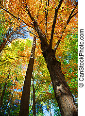Fall forest - Colorful fall forest on a warm autumn day