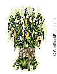 Corn harvest -detailed illustration of ripe stems for...