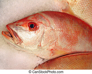 red snapper on ice - close up of frozen red snapper in the...