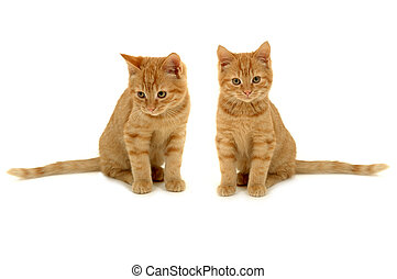 Twin kittens - Two sweet kittens is sitting side by side on...