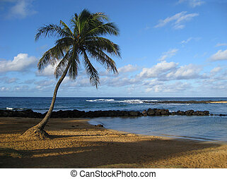One Palm Tree on Beach - One Palm Tree on Hawaiian Beach