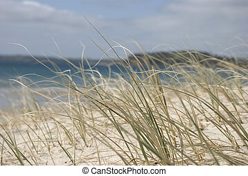 Seagrass - Tussock grass in the sand with beach in the...