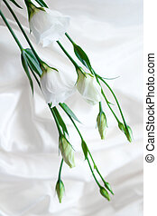 white flowers on the white silk background