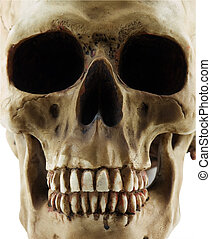 Human Skull - Close up of a human skull isolated on white