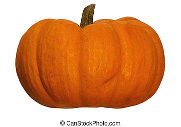 Short Halloween Pumpkin - Pumpkin on a plain white...