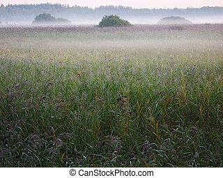 fog over bulrush - calm windless morning, misty sunrize over...