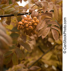 ashberry - focus point on the center of the image