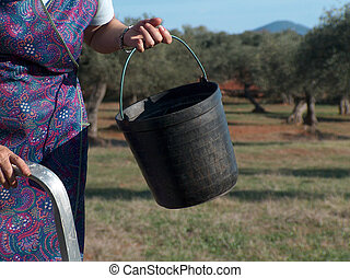 Olive Harvest Season Begins - Woman wearing a traditional...