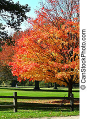 Autumn Colors - Autumn trees in a park during autumn time