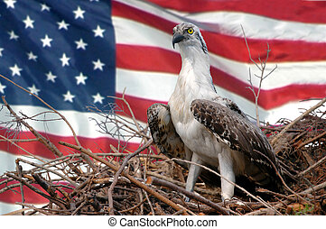 Young Bird - A young eagle in its nest with the flag of the...