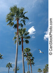 Sunny Day - Tall palm trees and a sunny sky background