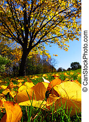 Autumn landscape - Fall landscape with autumn linden tree...