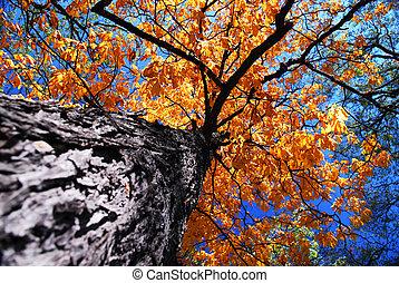 viejo, olmo, árbol, otoño
