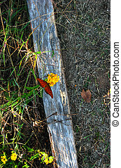 Butterfly On Flower - This butterfly stopped flitting around...