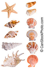 Seashells collection isolated on white background Each...