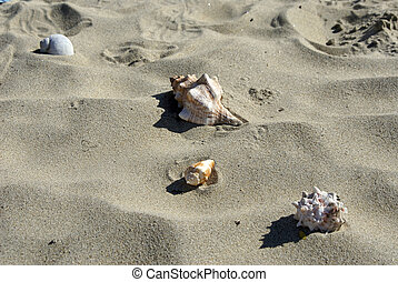 four shells on the beach - collection of seashells scattered...
