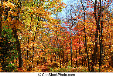 Autumn Trees - autumn trees in a park in michigan