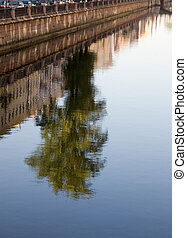 Watecolor reflections - reflection of the tree on the...