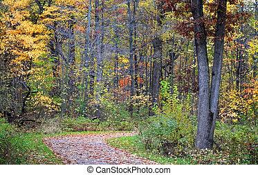 otoño, escénico, sendero
