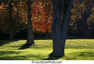Autumn Trees - Beautuful autumn trees on a sunny day in a...