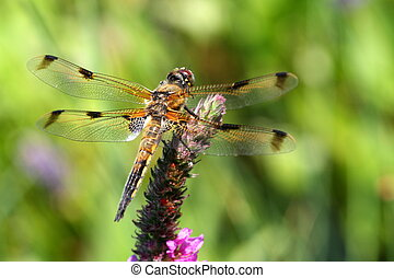 Dragonfly - A dragonfly sitting on a flower near a garden...