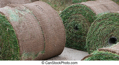 Sod Rolls - Sod bundled in large rolls