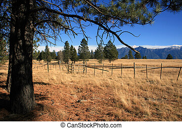 Mtns., pastureland, - Pasture, big pine tree in foreground,...