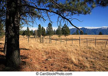 Mtns., pastureland, - Pasture, big pine tree in foreground,...