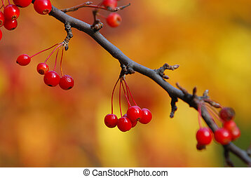 Red berries of Autum - Red berries of autumn forest witch...