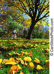 Fall park - View of biking trail in the fall, golden fallen...