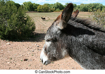 Donkeys (Equus asinus) are still used as pack animals...