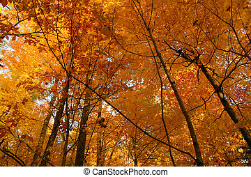 Golden October forest Canadian autumn