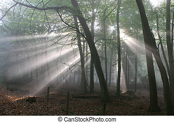 Forest Sunbeams - Atmospheric low light image of early...