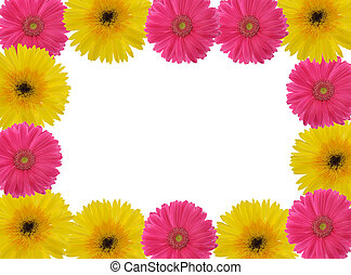 Red and Yellow Gerber Daisy frame