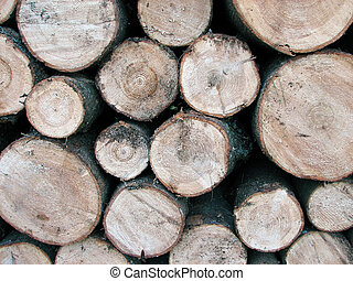 Pile of pine tree logs - Stacked wood beams