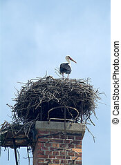 stork on the chimney - a stork sits in his nest on the...